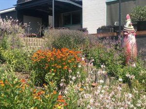 droogbestendige planten